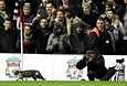 Kissa ilahdutti yleisöä juoksemalla kentälle Liverpoolin ja Tottenhamin välisessä ottelussa maanantaina.
