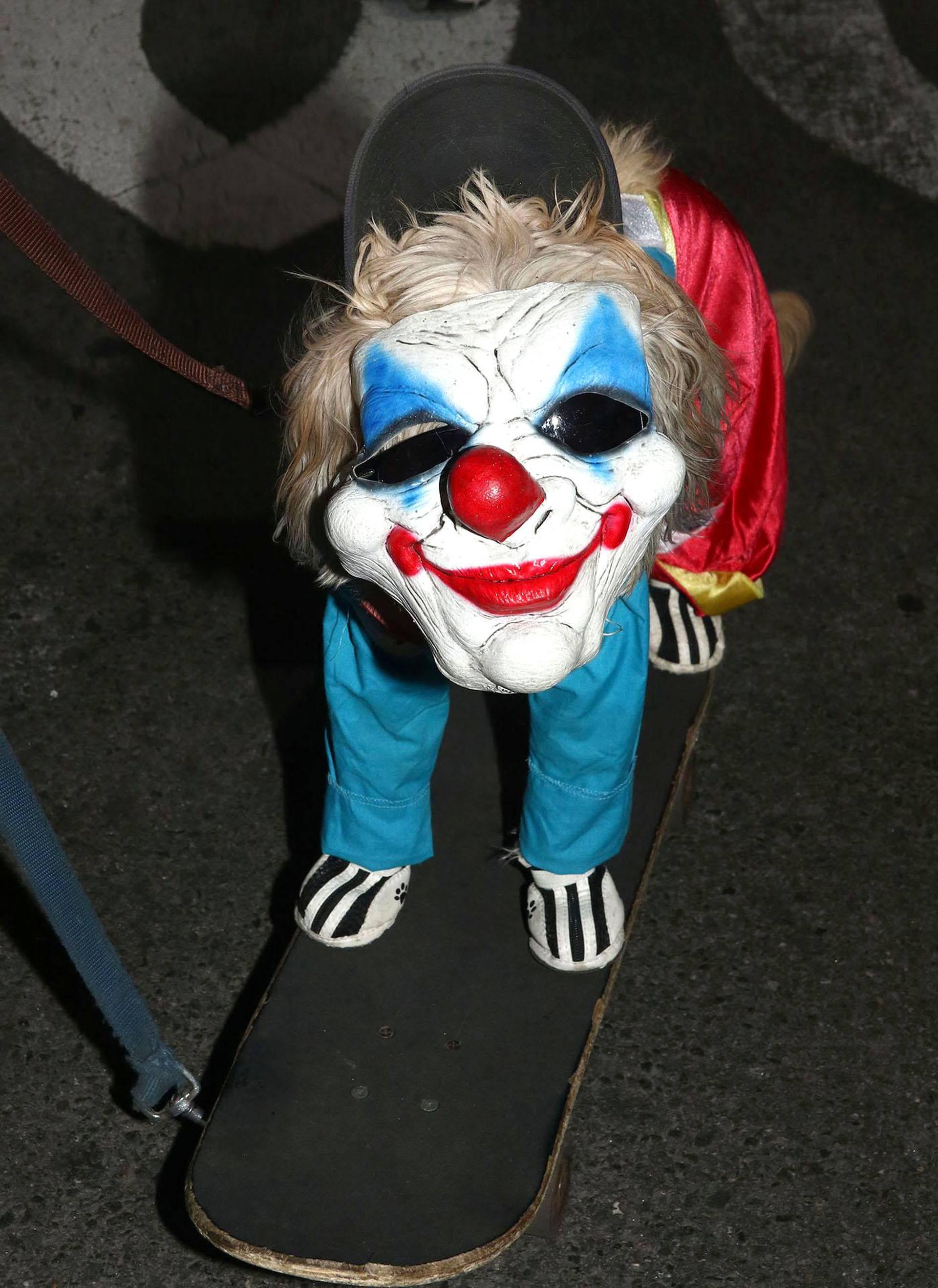 Koira kulki skeittilaudalla halloween-kulkueessa New Yorkissa.
