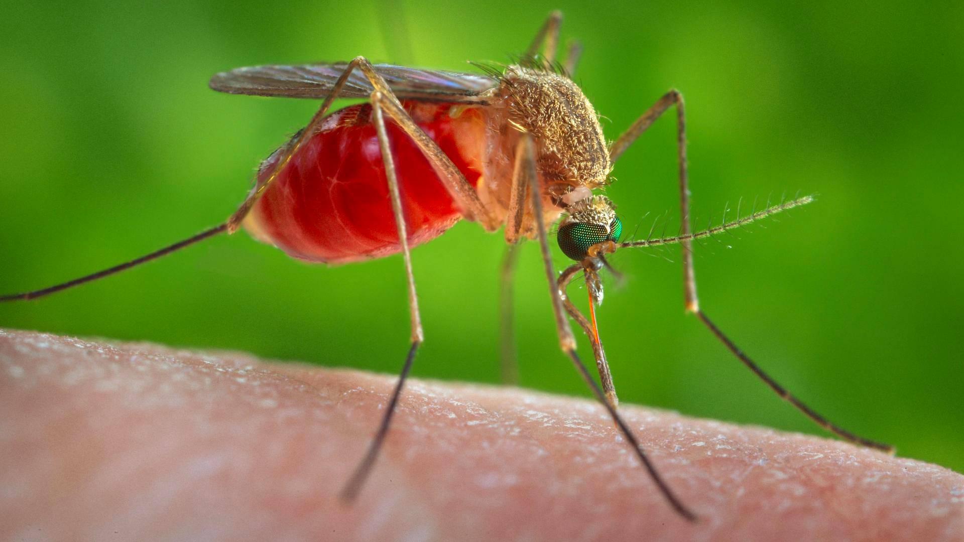 Länsi-Niilin Virus
