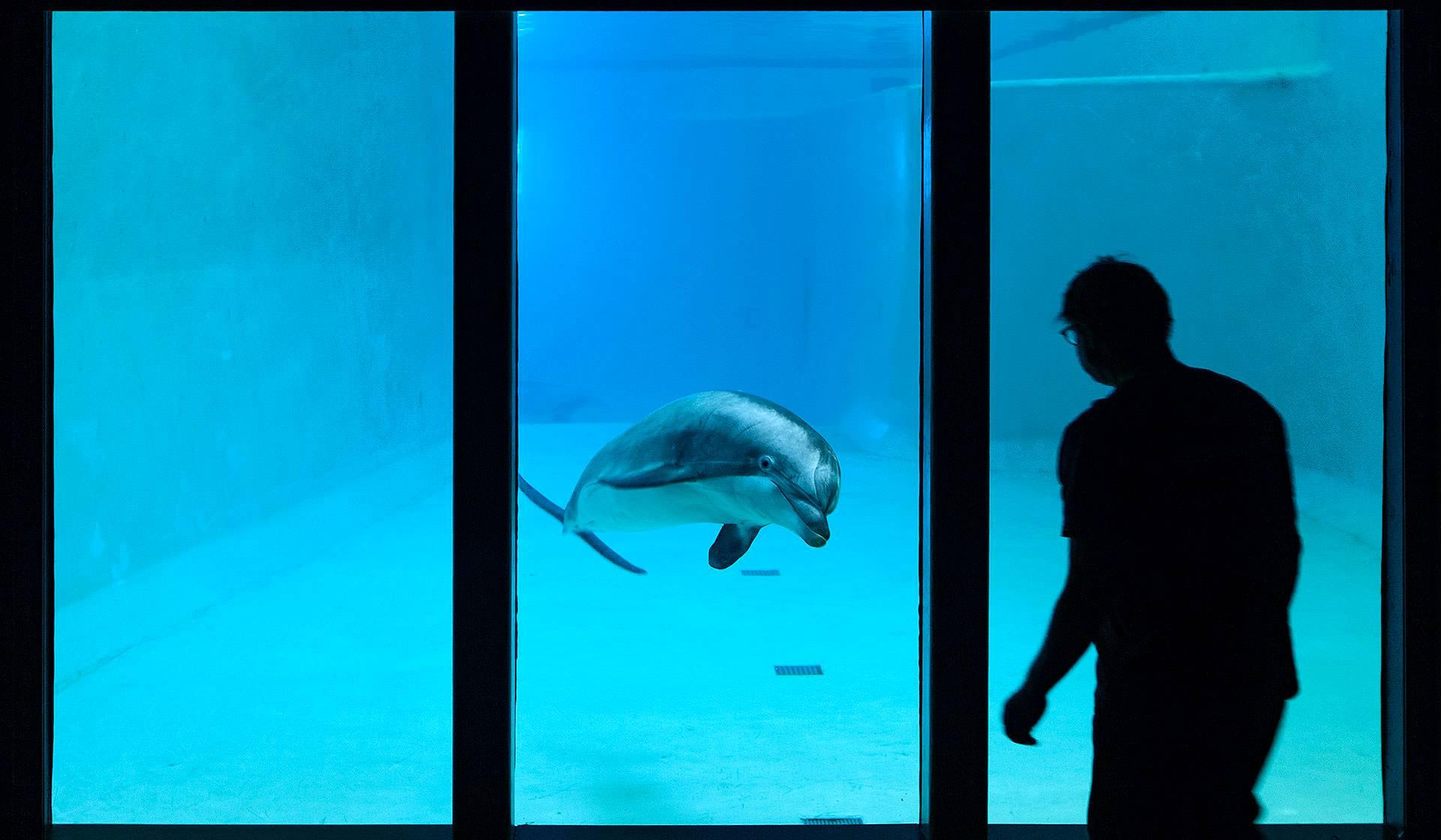 Leevi-delfiini ottaa hanakasti kontaktia ihmiseen.