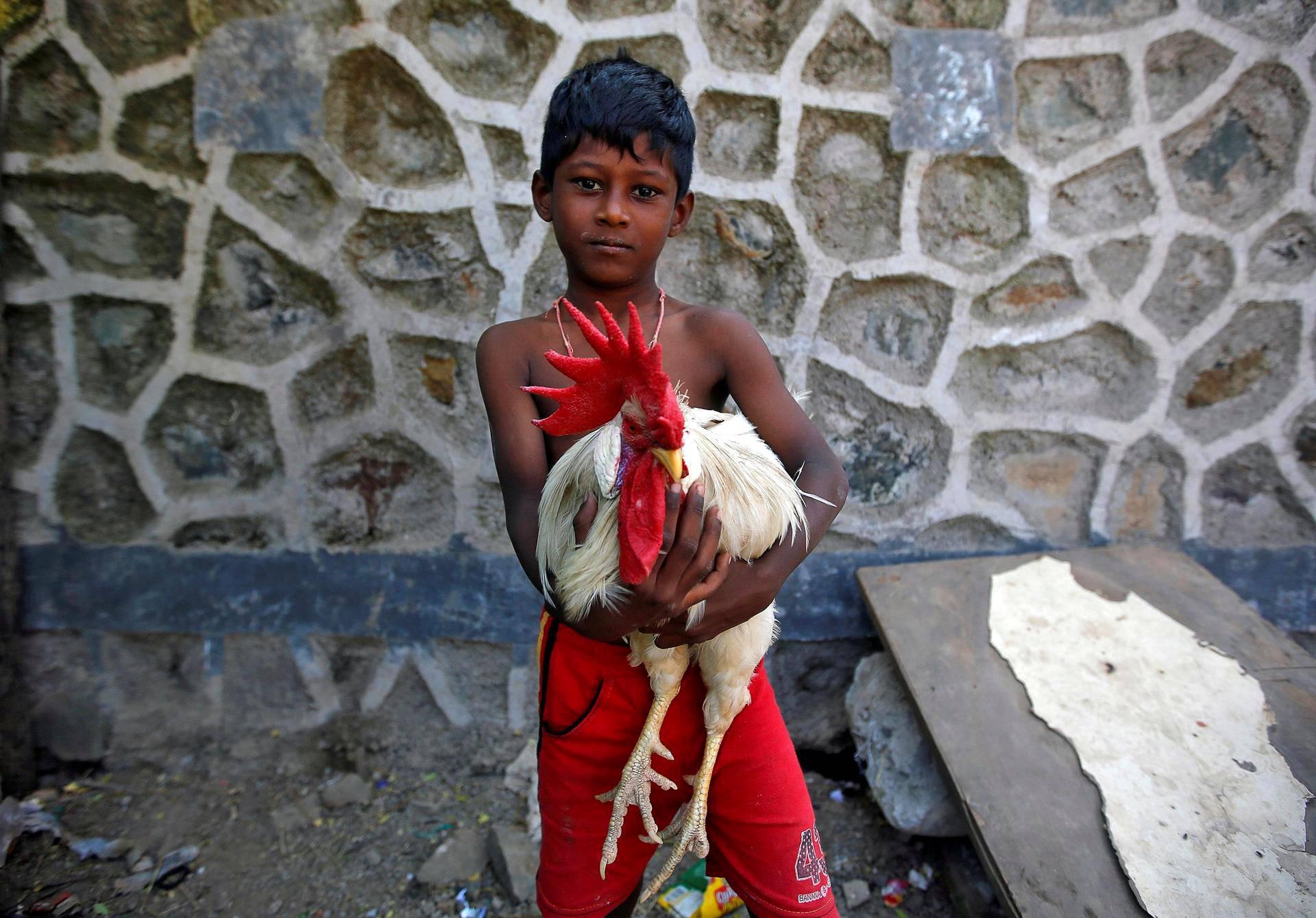 Kuusivuotias Virat piteli lemmikkikukkoaan sylissään Intian Mumbaissa.