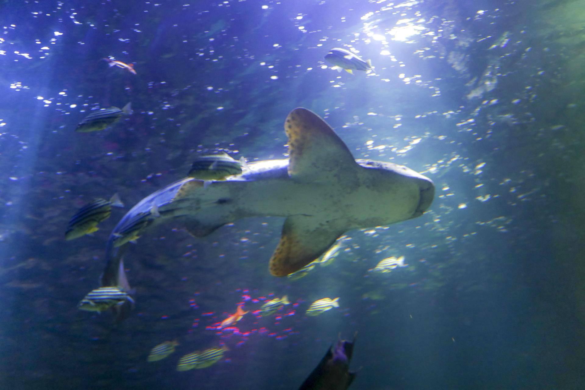 Merieläimiä