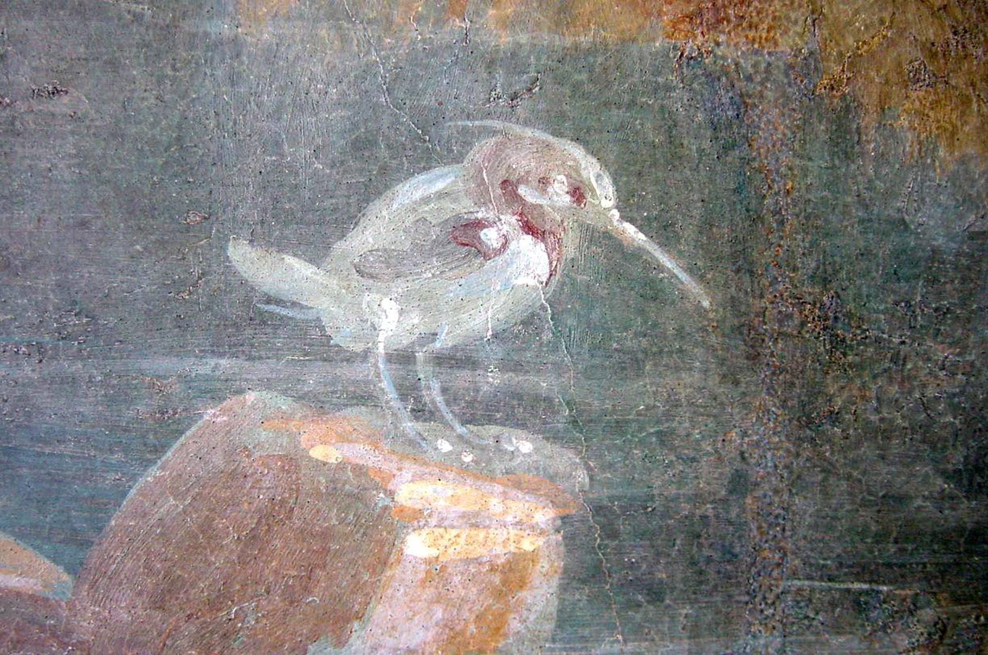 Kuva 7: Smyrnankalastaja (Halcyon smyrnensis) Pompejin Isiksen temppelin (Tempio d'Iside VII,7,28) IV tyylin seinämaalauksessa nk. sakraali-idyllisessä maisemassa, joka esittää luultavasti Isis-jumalattaren temppeliä Niilin varrella (nyk. Napolin arkeologisessa kansallismuseossa MANN 8570).[Tilan salliessa?] Tämä smyrnankalastaja on lajinsa ainoa seinämaalauksissa määritettävissä oleva yksilö. Lajin harvinaisuus seinämaalauksissa ja sen levinneisyys itäisellä Välimerellä viittaavat siihen, että tämän linnun maalannut maalari oli opetellut aiheistonsa maalaamisen hellenistisperäisen idän taidekeskuksissa.