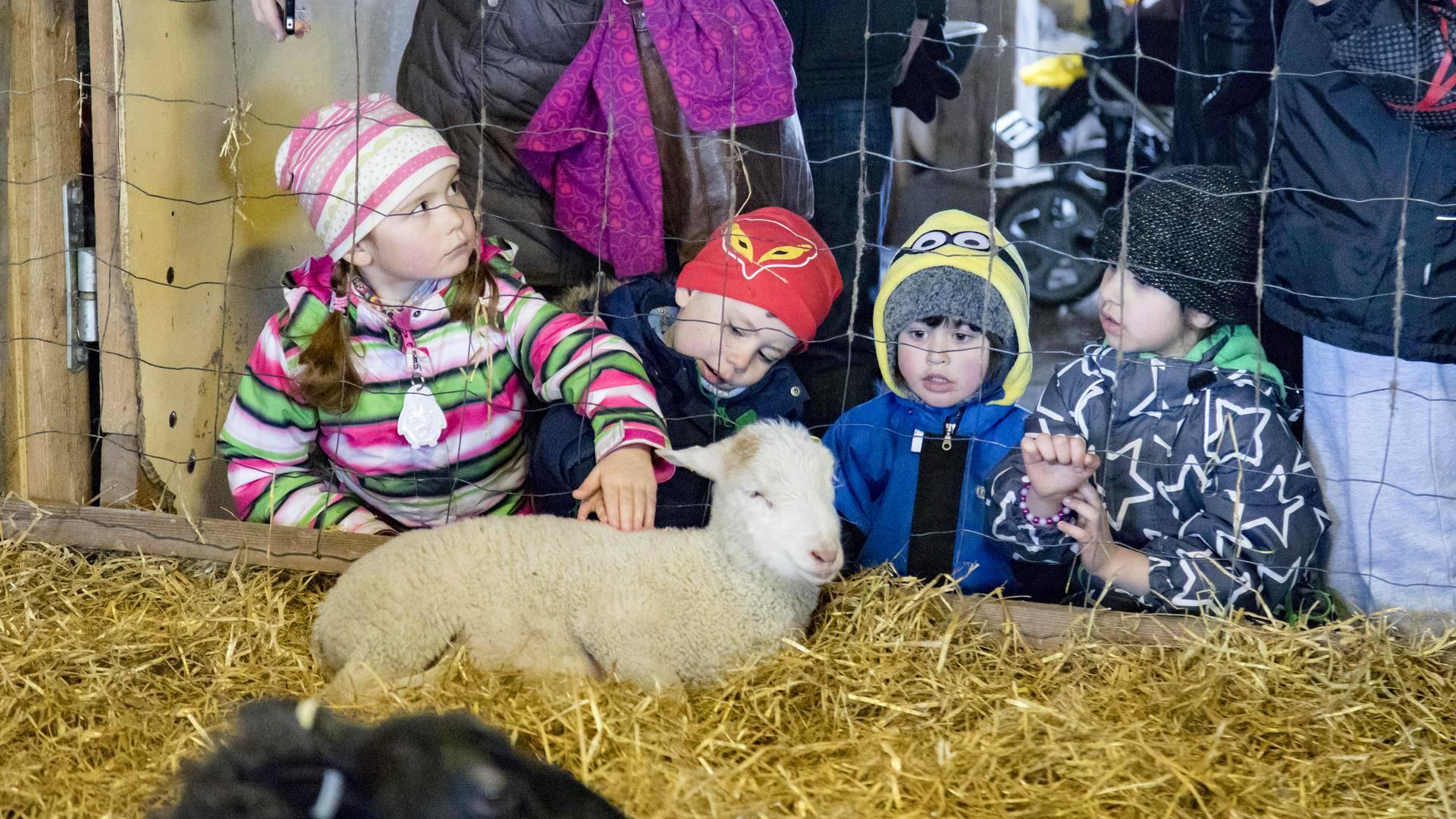Sisarukset Julia, 6, ja Niilo Tallgren, 4, pääsivät rauhassa paijaamaan pikkukaritsaa.