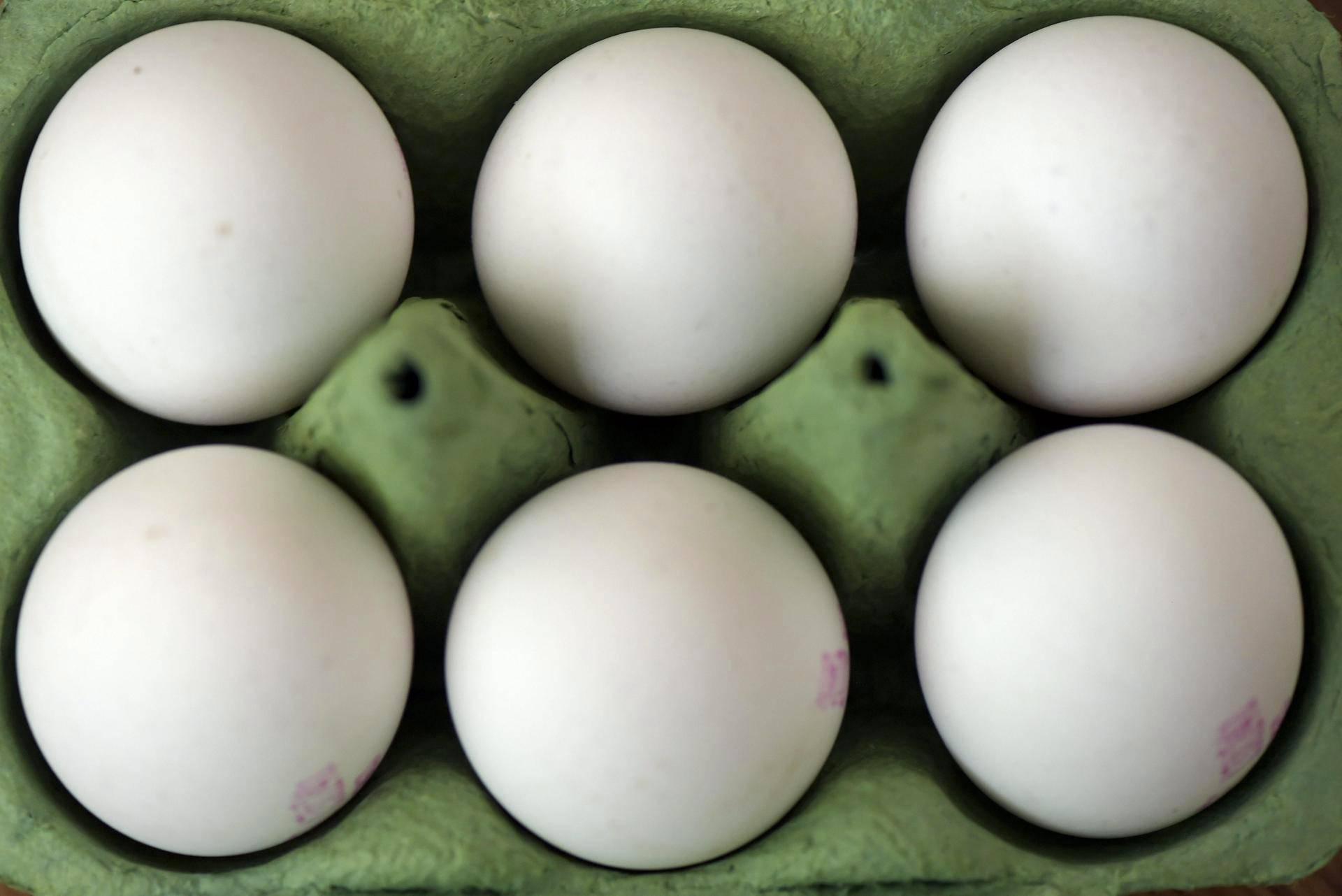 Kananmuna Päivässä