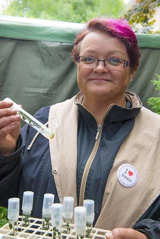 Paula Ilola esittelee terveitä Jussi-emokasveja koeputkissa.