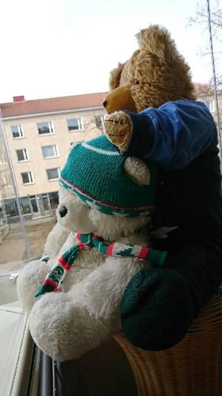 Pirjo-Liisa Penttisen yksivuotislahjaksi yli 60 vuotta sitten saaman Iso Nallen ja sen jääkarhukaverin voi bongata Herttoniemessä Hiihtomäentiellä.