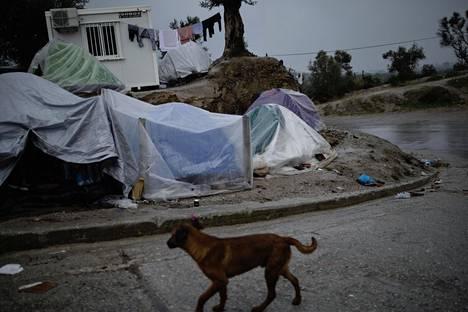 Morian leiriläiset suojaavat retkitelttansa sateelta muovipeitteillä.