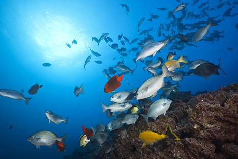 Revilla Gigedon saarten ja niitä ympäröivien vesien lajikirjo on monipuolinen.