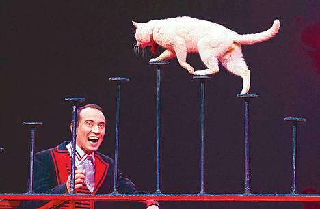 Kuudennen polven sirkustaiteilija Vlad Olondar esiintyy koulutettujen kissojensa kanssa Sirkus Finlandiassa.<BR/>