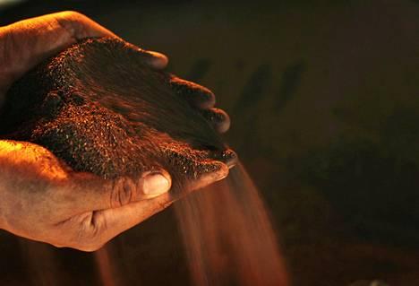 Kaivostyöntekijän esittelemää hienoksi jauhettua nikkelimalmia Sulawesissa Indonesiassa tammikuussa 2014.