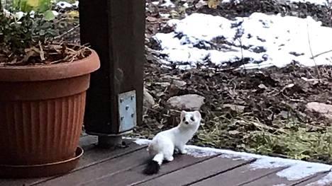 Kärppä on pieni ja nopea eläin. Talvisin eläin on hännänpäätä lukuunottamatta valkoinen.