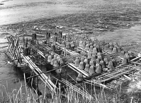 Vaikka vesien saastuminen onkin vähentänyt nahkiaisten pyydystämistä näkee vielä kuitenkin tokeita ja mertoja Kokemäenjoen varsilla.