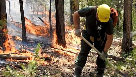 Venäjän metsänsuojelupalvelun työntekijä sammutti metsäpaloa Siperian Krasnojarskissa perjantaina.
