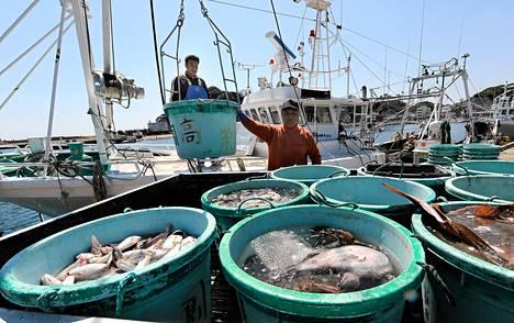 Kalastajat purkivat saalistaan Hirakatan kalatorilla Ibarakin prefektuurissa, lähellä Fukushiman ydinvoimalaa numero 1 vuonna 2011.