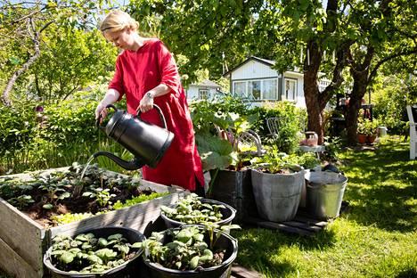 Kati Orava viljelee palstallaan muun muassa salaattia, perunaa, valkosipulia ja mansikkaa.