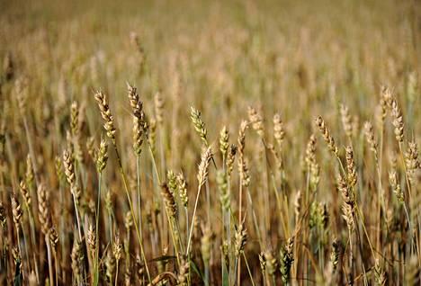 Viljelijätukien tavoitteena on turvata kotimaisten elintarvikkeiden tuotanto ja varmistaa kohtuuhintaisten elintarvikkeiden saatavuus.