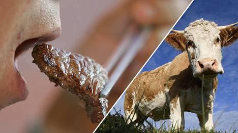 Lihansyönnin vähentäminen on yksi keskeisistä keinoista ehkäistä ilmaston lämpötilan nousemista.