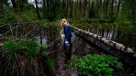 Hyttystutkija Lorna Culverwell kerää toukkia Helsingin Jollaksessa.