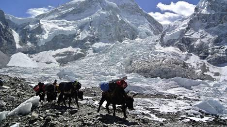 Sadat kiipeilijät yrittävät vuosittain Mount Everestin huiputusta. Moni on myös kuollut yrittäessä.