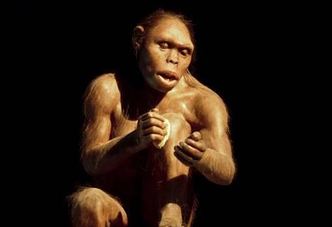 Malli naispuolisesta käteväihmisestä eli Homo habiliksesta. Kiinasta löytyneet alkeelliset kivityökalut on mahdollisesti valmistanut jokin käteväihmisen kaltainen varhainen ihmislaji.
