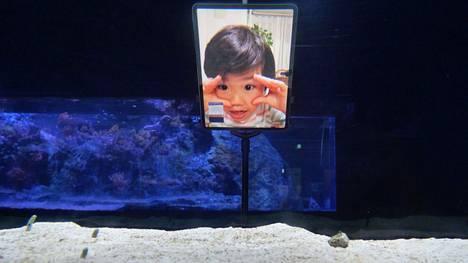 Tokiolaisessa akvaariossa toivotaan ihmisten ottavan ankeriaisiin yhteyttä.