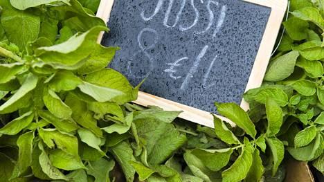 Tänä kesänä Jussi on kuin perunoiden kaviaaria: sitä on niukasti saatavilla. Kannattaa kuitenkin kysellä lajiketta torikauppiailta.
