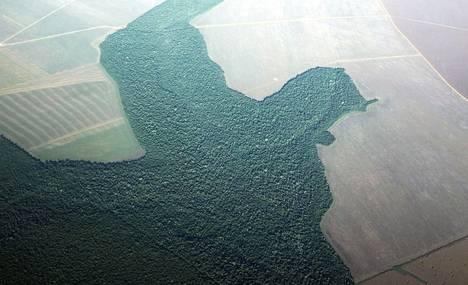 Vuonna 2013 sademetsää Paran alueelta Brasiliasta oli muutettu viljelymaaksi.