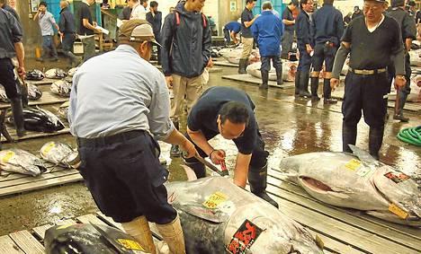 Tsukijin kalatorilla Tokiossa käydään tonnikalakauppaa.