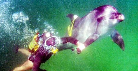 Kouluttaja ui taisteludelfiinin kanssa kuvassa vuodelta 1995. Silloin Sevastopolin delfiinitukikohta kärsi rahapulasta.