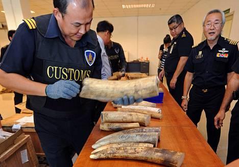 Tulliviranomaiset esittelivät takavarikoituja norsun syöksyhampaita lehtistötilaisuudessa Suvarnabhumin lentokentällä Bangkokissa viime heinäkuussa. Syöksyhampaat oli tuotu maahan Keniasta.