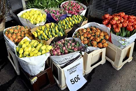 Tulppaanit ovat paikoin loppuneet Suomesta, muuta Kauppapuutarhaliiton toiminnanjohtaja Jyrki Jalkanen sanoo, että äitienpäiväksi niitä pitäisi olla jälleen saatavilla.