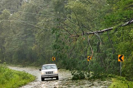 Sähkölinjojen päälle kaatunut puu Winnabow'ssa lauantaina. Alueella on laajoja sähkökatkoja hirmumyrskyn jäljiltä.