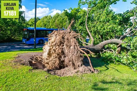 Myrskytuhoja Kaisaniemenpuistossa.