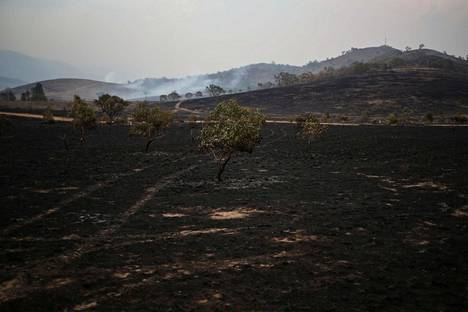 Maastopalojen jäljeltä hiiltynyt maisema lähellä Bumbalongin aluetta Uuden Etelä-Walesin osavaltiossa 2. helmikuuta.