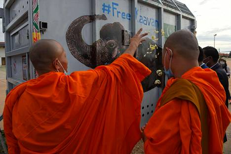Buddhalaiset munkit siunasivat Kaavan-norsun sen saapuessa Kambodžaan maanantaina 30. marraskuuta.