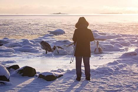Ulkoilija kohtasi joutsenia Lauttasaaren rannalla.