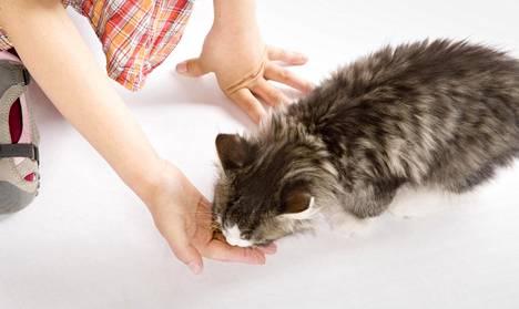 Kissan kanssa tulee vähemmän riitaa kuin siskon tai veljen.