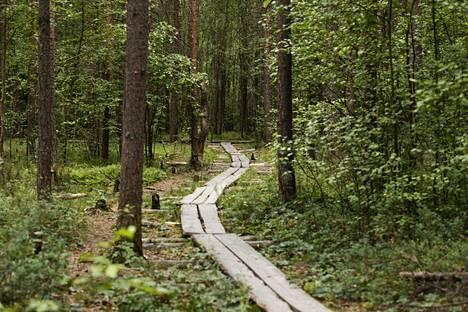 Luontopolku johdattaa Slåttmossenin keidassuolle luonnonsuojelualueella Helsingin ja Vantaan rajalla.
