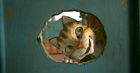 Viiru-kissa on tullut tahtoikään.