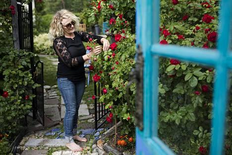 Marjo Hämäläisen lempikukkia puutarhassa ovat köynnökset . Tämä köynnösruusu oli ensimmäinen kasvi, jonka Hämäläinen istutti puutarhaan.