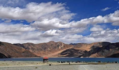 Lehmät katselivat vierestä, kun turistit ottivat kuvia Pangongjärvellä Intian ja Kiinan rajavyöhykkeellä Ladakhissa 2018.