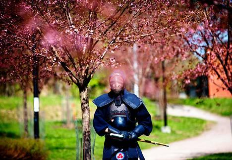 Roihuvuoren Kirsikkapuistossa vietetään tulevana sunnuntaina hanami-juhlaa. Kendô-harrastaja Pasi Pakula esittelee juhlassa lajia.