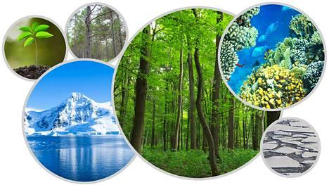 Jäätiköt jatkavat sulamistaan samaan aikaan, kun ilmakehän hiilidioksidipitoisuus kasvaa. Kasvit sitovat hiilidioksidia ilmakehästä.