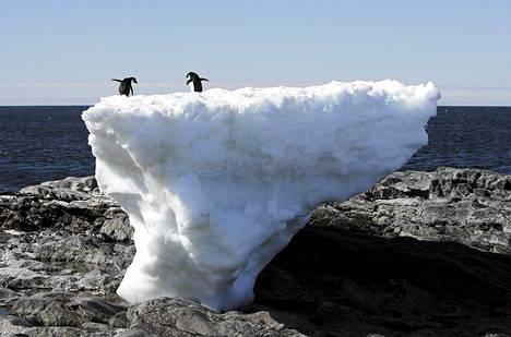 Kaksi pingviiniä tasapainoili sulavan jäälohkareen päällä Cape Denisonissa Etelämantereella 2010.