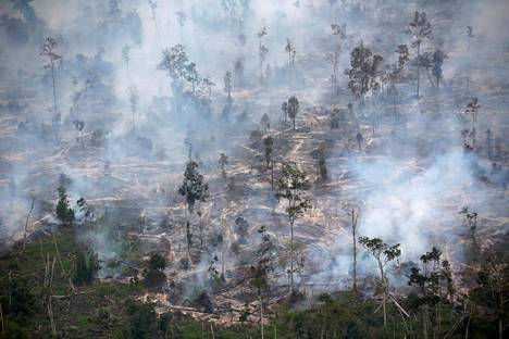 Hiiltynyttä metsää Keski-Kalimantanin provinssissa Borneon saarella Indonesiassa.