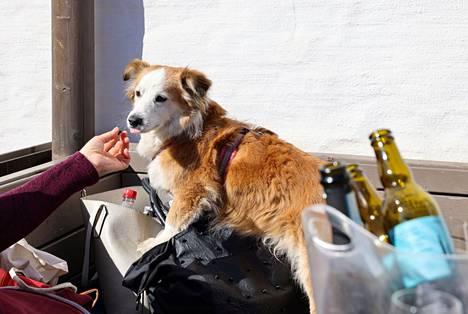 Jatkossa koira pääsee ravintolan lisäksi myös ruokaostoksille omistajansa kanssa. Kuvassa Mauno Lasipalatsin terassilla.