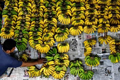 Panaman Tauti