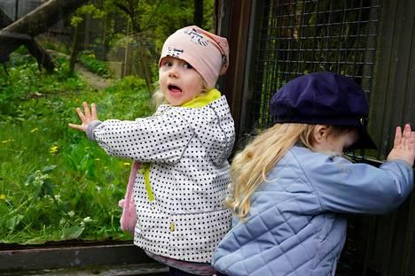 Siiri Koivisto, 2, ja Olivia Nikkari, 2, katselivat amurinleopardia ja häkin reunalla kiipeilleitä muurahaisia Korkeasaaressa.