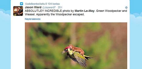 Jason Ward esitteli Martin Le-Mayn ottaman kuvan tikasta ja näätäeläimestä Twitter-tilillään.
